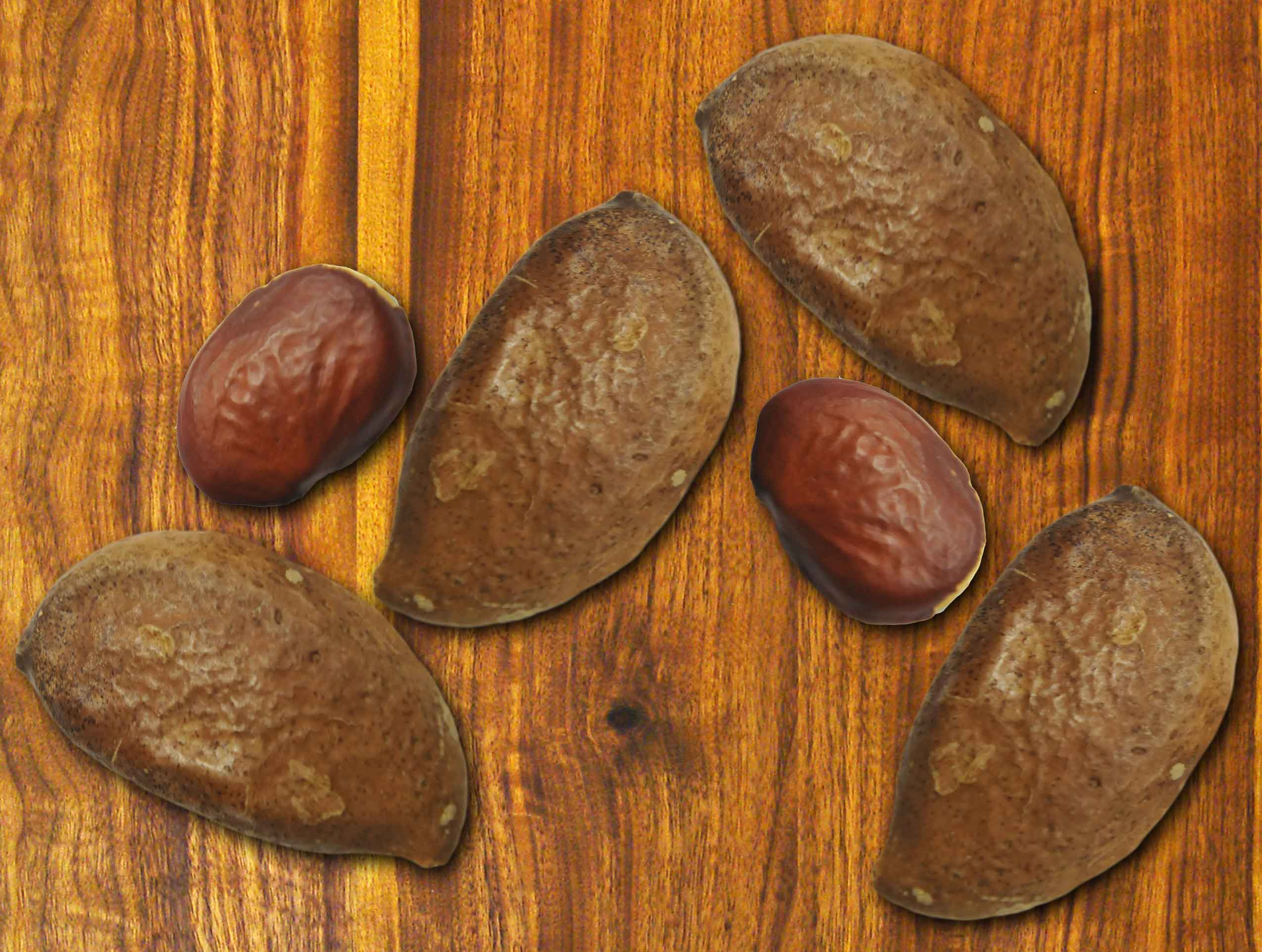 Pongamia Nuts