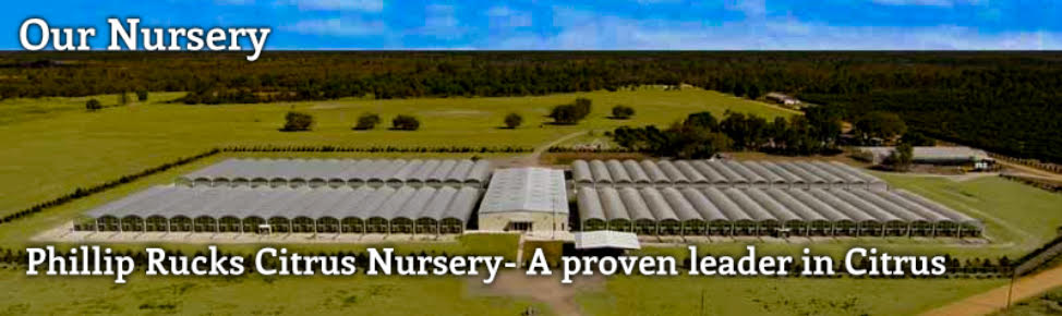 Phillip Rucks Citrus Nursery - A proven leader in Citrus and Bamboo